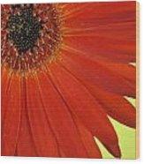 Dsc883d-002 Wood Print