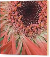 Dsc916d-002 Wood Print