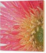 Dscn547911.2.c1 Wood Print
