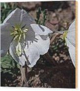 Dual Primrose Flowers Wood Print