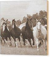 Duchess Sanctuary Big Herd Wood Print