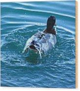 Duck Bath Wood Print