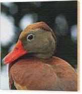 Duck Call Wood Print