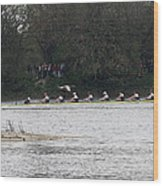 Duck Chasing The Boat Race Wood Print