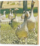 Duck Duck Goose Wood Print