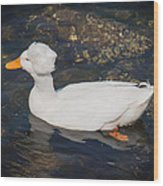 White Crested Duck Wood Print