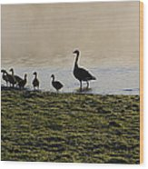 Duck Family Panorama Wood Print by Bill Cannon