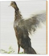 Duck Flapping Wings Wood Print