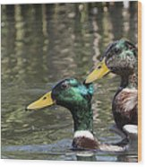 Duck Good Friends 1 Wood Print