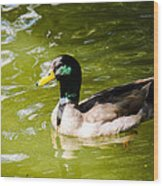 Duck In The Park Wood Print