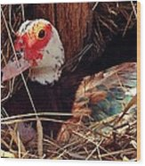 Duck In The Roost Wood Print