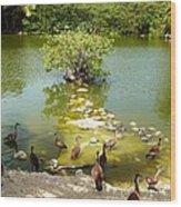 Duck Island Wood Print