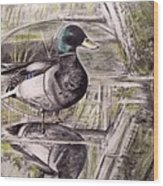 Duck Of Pond Wood Print