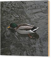 Duck On A River Wood Print