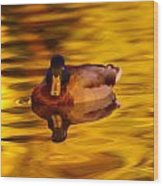 Duck On Golden Water Wood Print