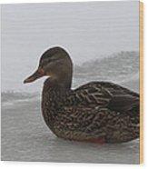 Duck On Ice Wood Print