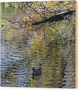 Duck On Pond Wood Print