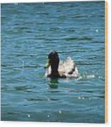 Duck On Sparkling Waters Wood Print