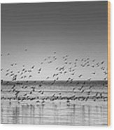 Duck Over Lake 1 B_w Wood Print