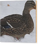 Duck Playing In The Snow Wood Print