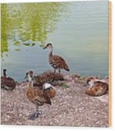 Duck Pond Wood Print