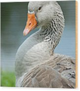 Duck Pose Wood Print