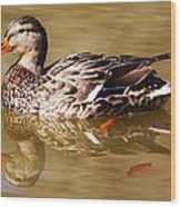 Duck Reflection Wood Print