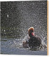 Duck Shower Wood Print