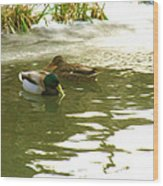 Duck Swimming In A Frozen Lake Wood Print