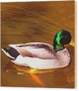 Duck Swimming On Golden Pond Wood Print
