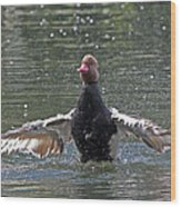 Duck Take Off. Wood Print