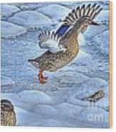 Duck Take-off Wood Print