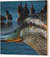 Duck Watching Ducks Wood Print