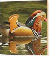 Duck Wild - Mandarin Wood Print by DerekTXFactor Creative