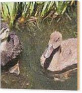 Duckies In The Pond Wood Print