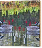 Duckland Pond Reflections Wood Print