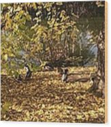 Ducklings In Sunshine Wood Print