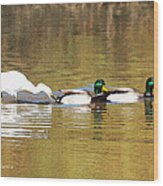 Ducks And Egret Wood Print