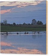 Ducks And Geese At Sunset Wood Print