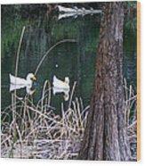 Ducks And Turtles Wood Print