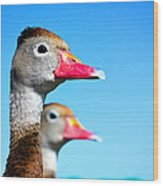Ducks At Attention Wood Print