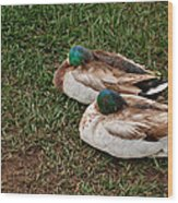 Ducks At Rest Wood Print