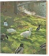 Ducks At The Park Wood Print