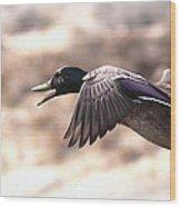 Ducks Have Teeth - Mallard Wood Print
