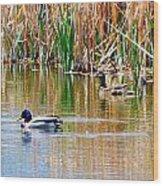 Ducks In A Marsh Wood Print