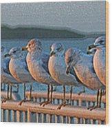 Ducks In A Row Wood Print