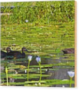 Ducks In Lily Pond Wood Print