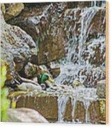 Ducks In The Falls Wood Print