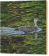 Ducks On Green Reflections - Panorama Wood Print