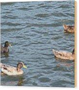 Ducks On Spaulding Pond Wood Print